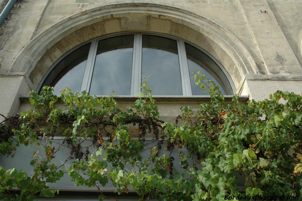 De vigne en vin - Maladie du raisin photo ...