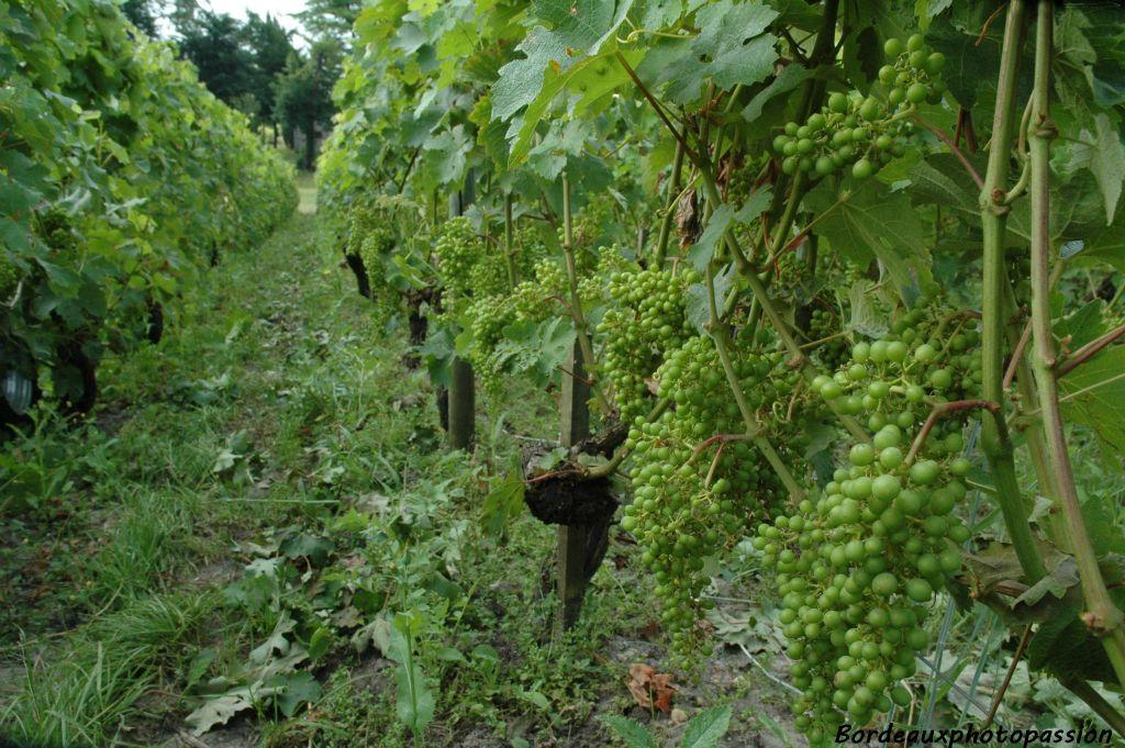 L 39 entretien de la vigne - Entretien de la vigne ...